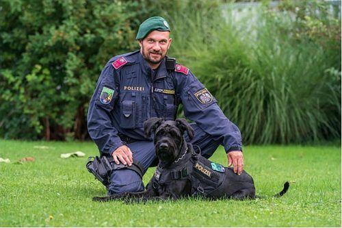 Diensthundeführer Bernd Ludl mit seinem Riesenschnauzer Alvaro, der den flüchtenden Einbrechern keine Chance ließ. POLIZEI