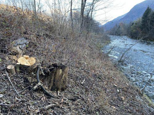 Entlang des Illufers in Bartholomäberg wurde kürzlich aus Sicherheitsgründen ausgeholzt.VN/JS
