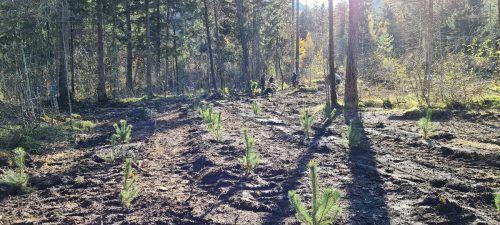 Im Galinawald wurden anlässlich des 1200-Jahr-Jubiläums der Gemeinde Nenzing ebenso viele Bäume aufgeforstet.EM
