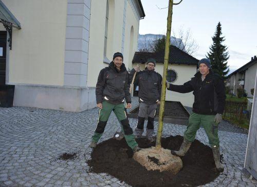 Mitarbeiter der Stadtgärtnerei pflanzten die Linde.
