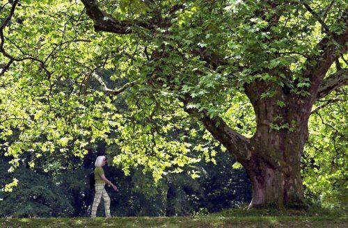 Personen, die oft Naturräume besuchen, berichteten auch über ein besseres körperliches und geistiges Wohlbefinden. dpa