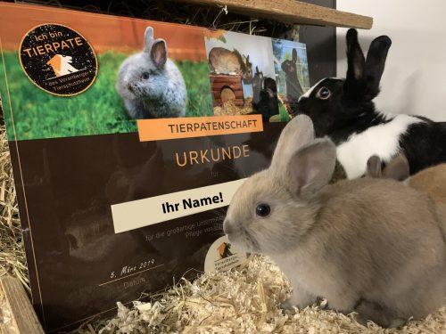 Tiere sind keine Geschenke. Um ein Tier langfristig zu unterstützen, bietet das Tierschutzheim Vorarlberg die Möglichkeit, Patenschaften zu übernehmen. TSH