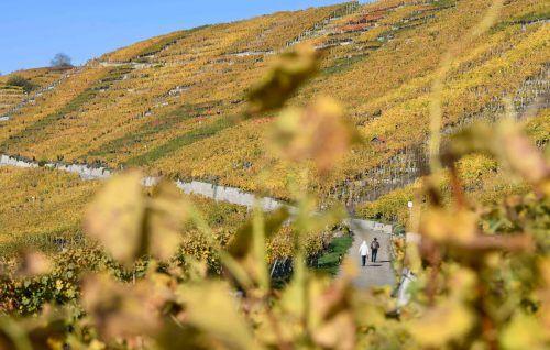 Weingärten in naturnaher Landschaft haben weniger Schädlinge. AFP