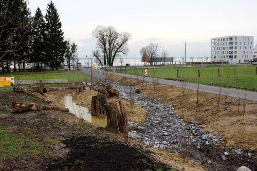 Der Oberlochauerbach wurde in den vergangenen Wochen entlang der neuen Wohnanlage Seedomizil bis die L190 geöffnet und naturnah gestaltet. bms/2