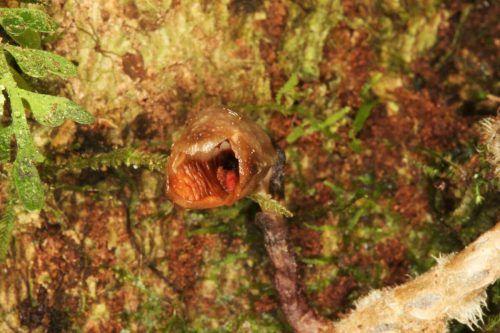 Die Pflanze wurde auf Madagaskar entdeckt. Reuters