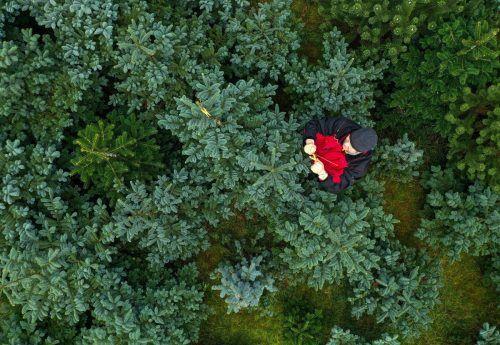 Diese Luftaufnahme zeigt Heiko Tacke auf seinem Weihnachtsbaumhof in der Stadt Halver im deutschen Bundesland Nordrhein-Westfalen. AFP