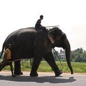 """<p class=""""factbox"""">Dieser Mahut, ein Elefantenführer, reitet mit seinem Dickhäuter über eine Straße in Piliyadala, einem Vorort von Colombo. AFP</p>"""
