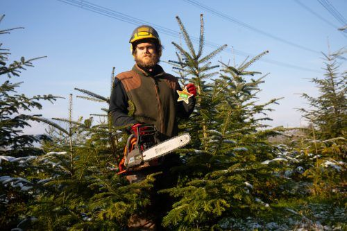 Im Landesforstgarten in Rankweil werden seit rund 15 Jahren Christbäume angepflanzt. Auf Wunsch können sie auch selbst gefällt werden. VN/Hartinger