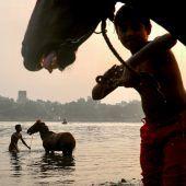 """<p class=""""factbox"""">Junge Reiter baden ihre Pferde im Fluss Buriganga in Dkaha, der Hauptstadt von Bangladesch. reuters</p>"""