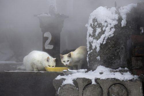 Streunende Katzen fressen in Omsk in der Nähe von Heizungsrohren. AP