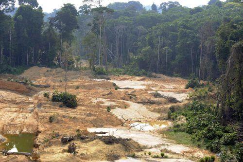 Den größten Verlust gibt es dem WWF-Report zufolge im Amazonas. AFP