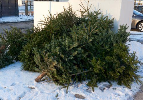 In Vandans werden heute die leeren Christbäume eingesammelt.STB