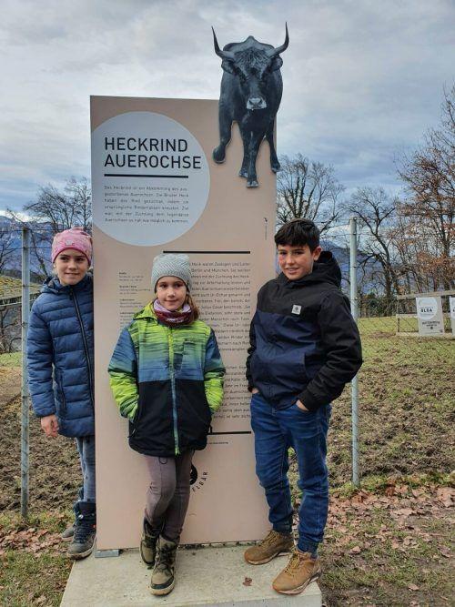 Die fleißigen Spender Klara, Linda und Martin beim Besuch der Auerochsen. Wildpark