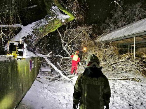 Die Hohenemser Feuerwehr beseitigt einen umgestürzten Baum.