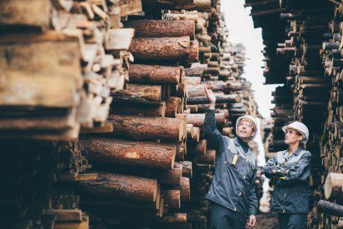 Die Holz verarbeitende Branche braucht gut ausgebildete Fachkräfte. Shutterstock