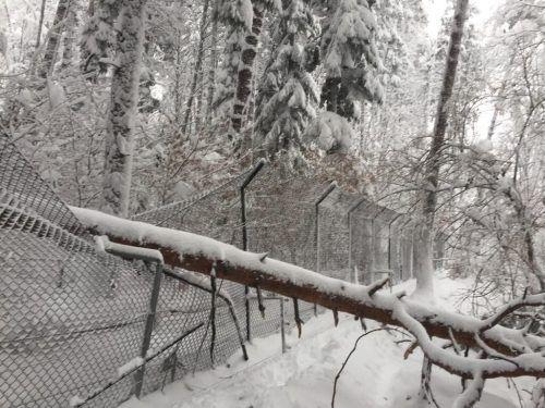 Ein umgestürzter Baum beschädigte ein Gehege im Wildpark. Wildpark