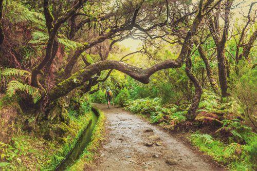 Entlang der alten Bewässerungskanäle führen Wege, die heute vor allem von Wanderern sehr geschätzt werden.Shutterstock (4)