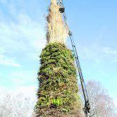 Brugger Funker sammeln Christbäume