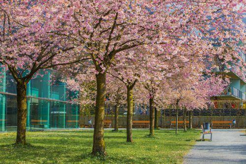 Grünfläche neben dem Stadtbad: Auch die Stadtentwicklung soll eine grüne Handschrift tragen.VN/Steurer