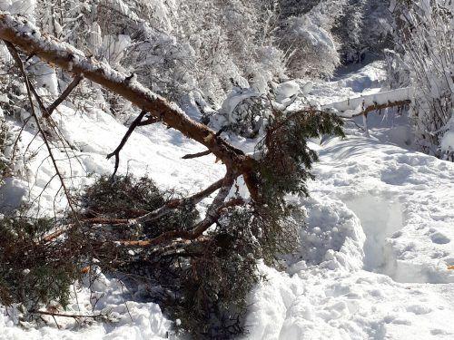 Von Spaziergängen in den verschneiten Wäldern in und um Bludenz wird aufgrund von unkontrollierten Baumstürzen weiterhin abgeraten.Stadt Bludenz