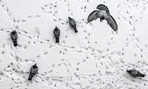 Winterliches Prishtina: Auf der Schneedecke in der kosovarischen Hauptstadt ist ein Gewimmel an Taubenfußspuren zu erkennen. AFP