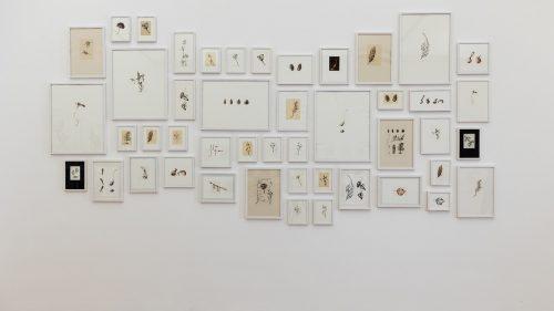 Auch die Vorarlberger Künstlerin Melanie Berlinger stellt in der Galerie allerArt ihre Arbeiten mit botanischen Illustrationen aus. Sprengel