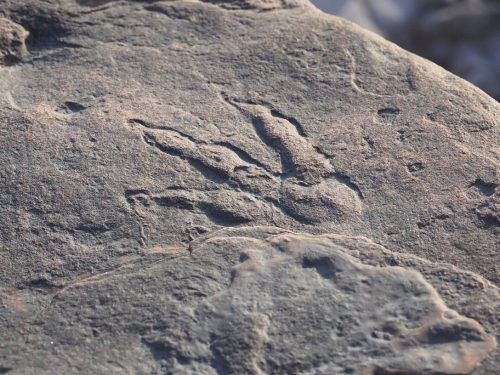 Der Fußabdruck soll 220 Millionen Jahre alt sein. Twitter/Amgueddfa Caerdydd
