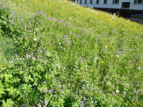 Der Thüringer Bewirtschaftungszuschuss soll Anreiz sein, mehr blühende Wiesen zu schaffen.Gemeinde