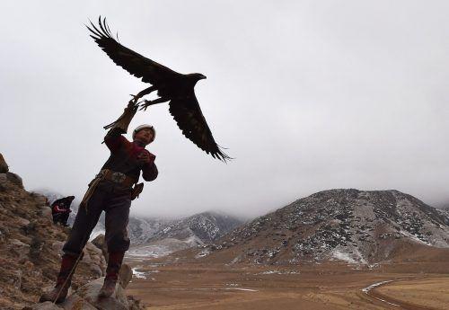 """Ein Berkutchi (Adlerjäger) lässt seinen Steinadler in Tuura-Suu, Kirgisien, fliegen. Mann und Vogel nehmen am Jagdfest """"Salburun"""" teil. AFP"""