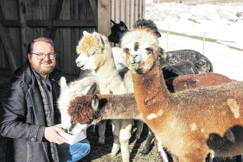 Michael Müller füttert gerade seine sieben Alpakas. Mit ihnen bietet er Wanderungen in Thüringerberg an. Böcken
