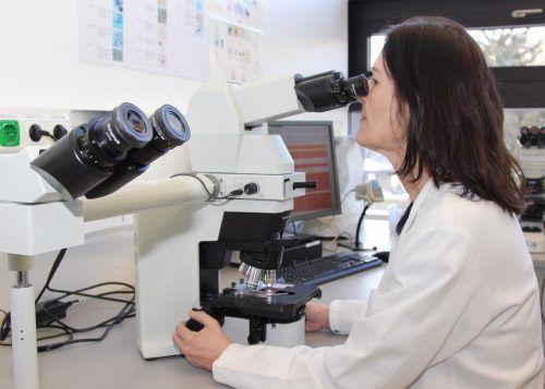 Der Blick durch hochauflösende Mikroskope gehört für Oberärztin Gabriele Hartmann und ihr Team zum Arbeitsalltag.khbg