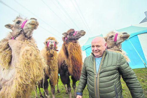 Adolf Lauenburger und seine vier Kamele im neuen Quartier beim Dornbirner Messeareal.                              VN/Steurer