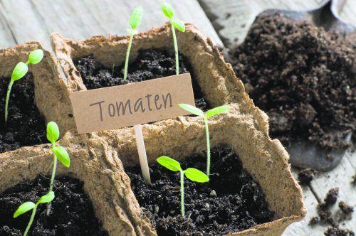 An einem geeigneten Standort kann Gemüse gut vorgezogen werden.iStock