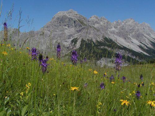 Bergwiesen wie diese sind wertvolle Naturjuwele, die es zu erhalten gilt.vlk