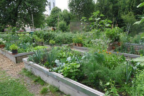 Der Traum vom selbst angebauten Gemüse wird im Blattur real.Marktgemeinde