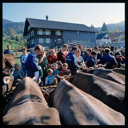 Alberschwende, Viehmarkt, 1989