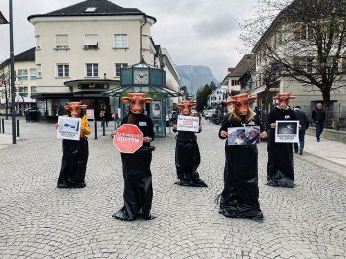 Der Verein gegen Tierfabriken demonstrierte am Wochenende in Dornbirn gegen Tiertransporte. VGT