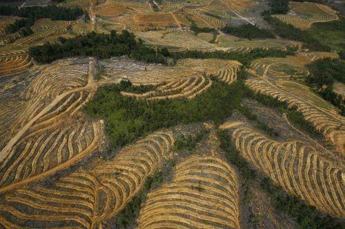 Die mit Abstand größten Verursacher von Abholzung durch EU-Importe waren Soja gefolgt von Palmöl.Reuters