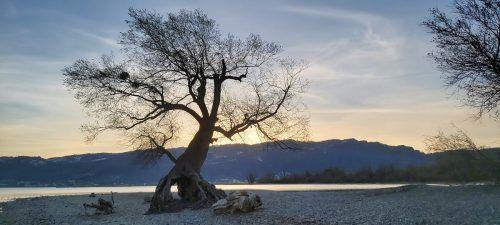 Dieses Foto gelang VN-Leserin Martina Lang am Bodenseeufer in Bregenz.