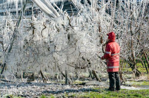 Eine Frostberegnung erzeugt bizarre Landschaften. Bei starkem Wind kann sie nicht in Betrieb genommen werden. VN/Stiplovsek