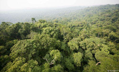 Vor dem Einschlag zeichnete ein offenes Kronendach die Regenwälder aus.AFP