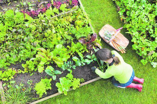 Bei der Mischkultur wird der Platz im Beet optimal ausgenutzt.iStock
