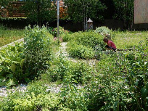 Der inatura-Kräutergarten blüht wieder.