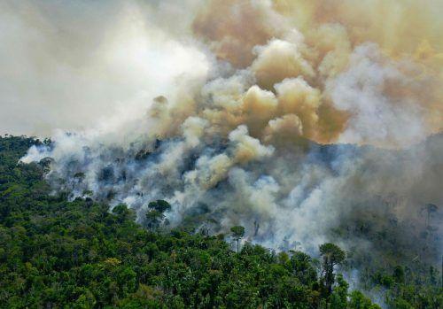 Der Regenwald bindet normalerweise riesige Mengen klimaschädliches CO2. Durch Brandrodung entsteht aber mehr davon, als er aufnehmen kann. afp