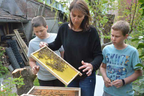 Ein eigenes Bienenvolk zu besitzen, war schon immer ein Traum von Familie Birkel.