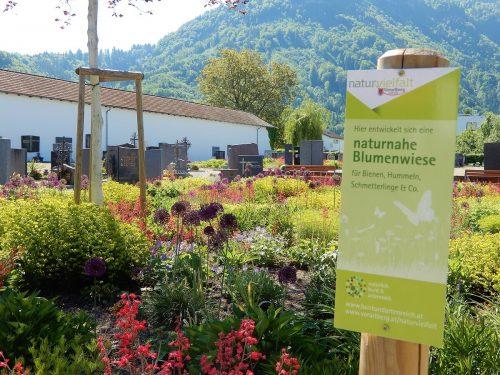 Ein Fest für Augen und Insekten sind die Grünanlagen im Friedhof Hatlerdorf.cth (2)