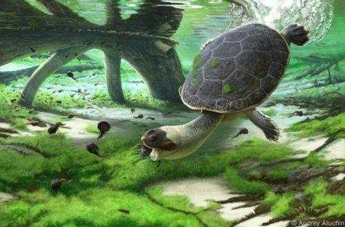Eine Rekonstruktion der Schildkröte bei der Jagd auf Kaulquappen. Atuchin