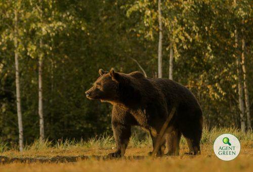 Emanuel von und zu Liechtenstein soll im März einen 17 Jahre alten Braunbären geschossen haben. Agent Green/AP