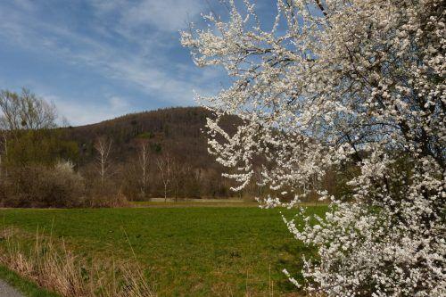 Frühling in Koblach.Maria Berg