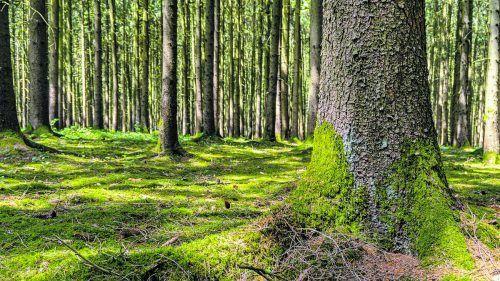 In Bad Wörishofen gibt es einen Kneipp-Waldweg mit 40 Stationen.Shutterstock